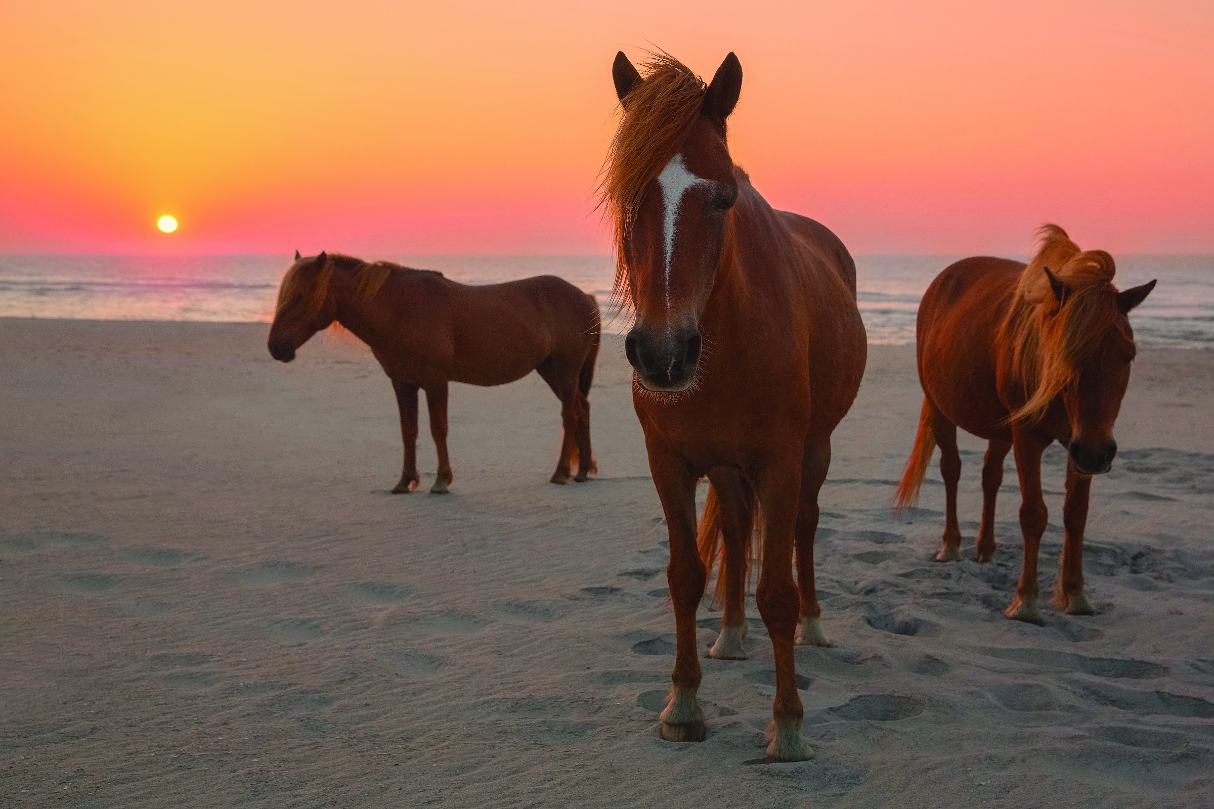 Strolling the Shifting Sands of Assateague Island