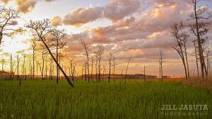 Elliotts Island Sunrise (JJP)