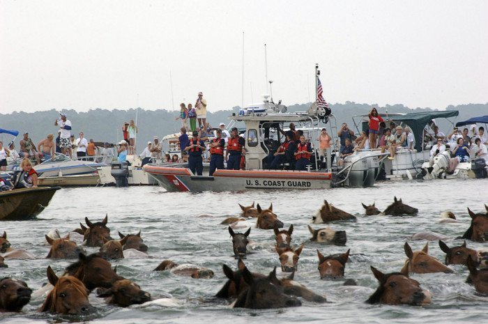 Tracing the History of the Famous Pony-Penning Party in Chincoteague