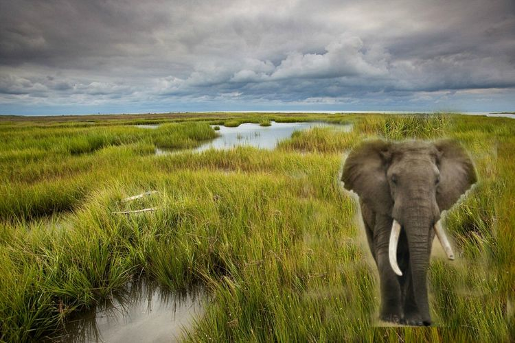 The Day an Elephant Marched Through the Marshlands of Saxis