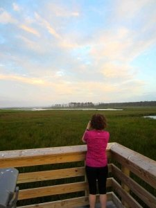 Overlook at Blackwater National Wildlife Refuge on Eastern Shore of Maryland