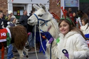 St. Michaels Christmas Parade Alpaca