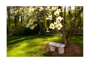 Dogwood in Bloom Greeting Card for for Valentines Collection of Secrets of the Eastern Shore