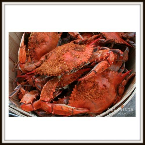 Steamed Crabs Photo Print