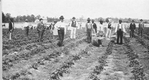 DELMARVA CLASSIC: The Sweet Strawberry Boom of Days Gone By