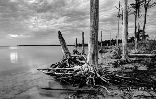 Beauty in What Remains on the Eastern Shore