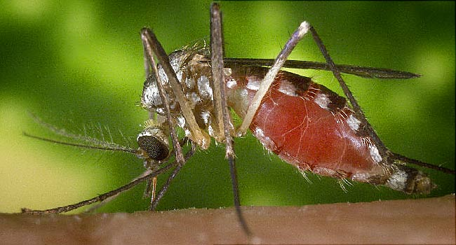 QUOTE OF THE DAY: 'The mosquito,' Dr. Tawes would say, 'is one of the noblest creatures known to nature.'