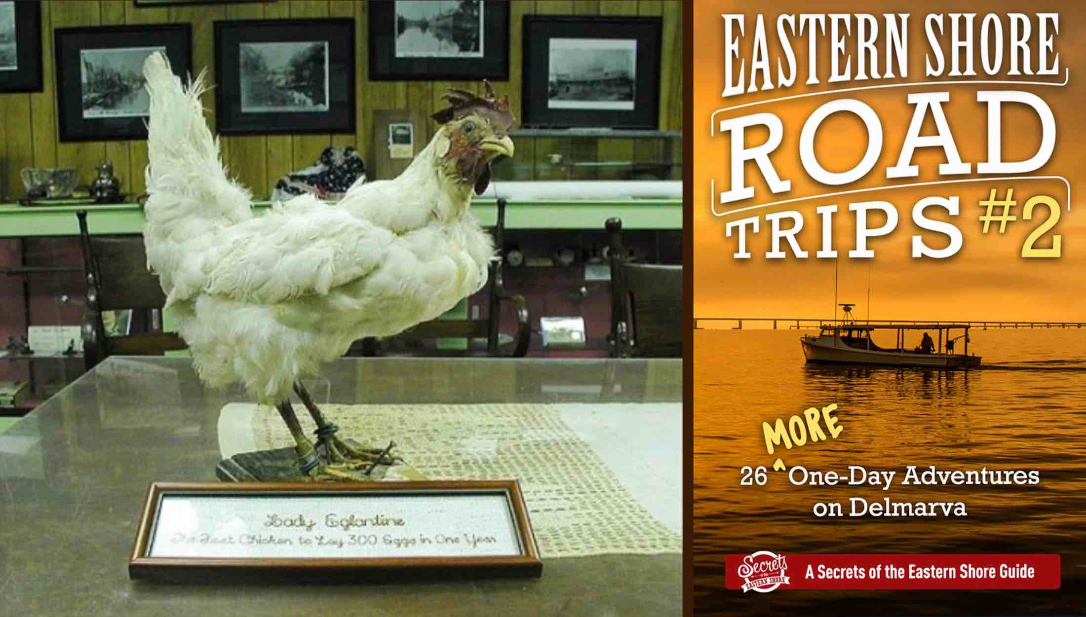 WAY BACK MACHINE: On the Trail of Lady Eglantine, the Miracle Hen of Greensboro