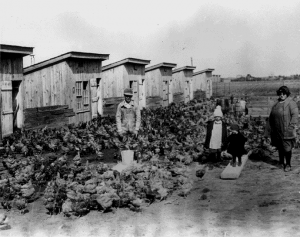 Cecile Steele In Farm Yard in Ocean View, Delaware