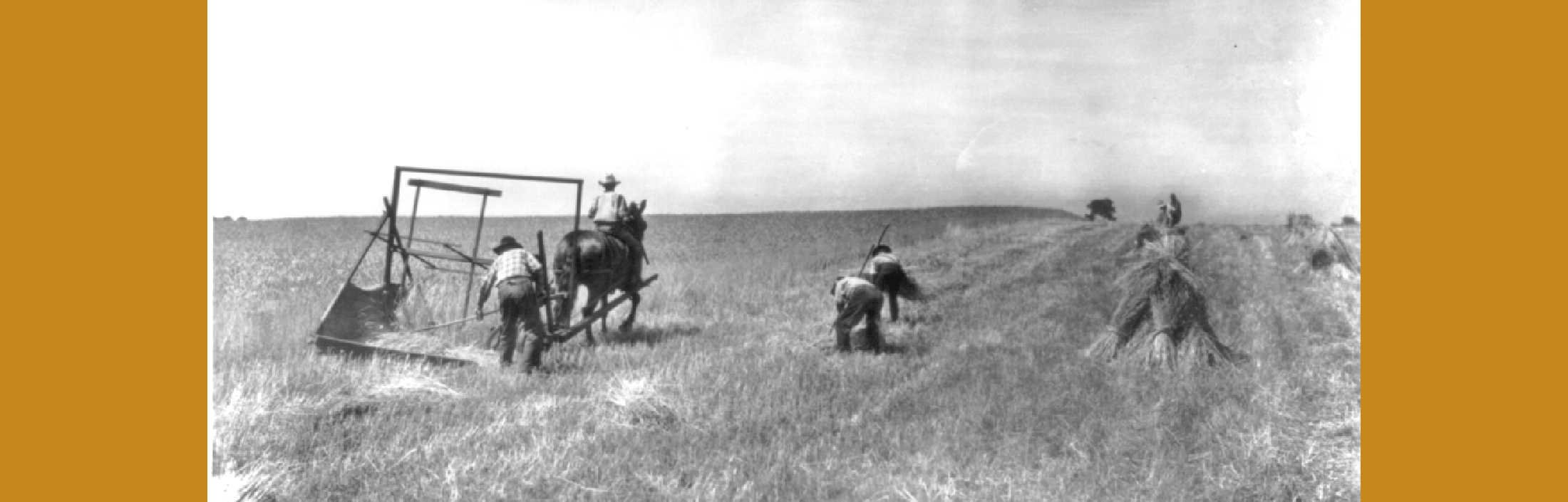 Harvest Time in the 1850s: The Key to Success Was … wait … Whiskey on the Job?