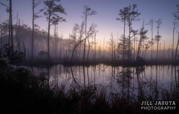 Gentle Sunrise Through The Fog in South Dorchester, Maryland