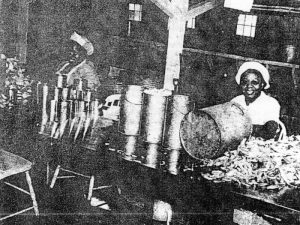 Coulbourne and Jewett Crabpickers in Summer of 1950 Names Tolitha Palmer and Virginia Washington