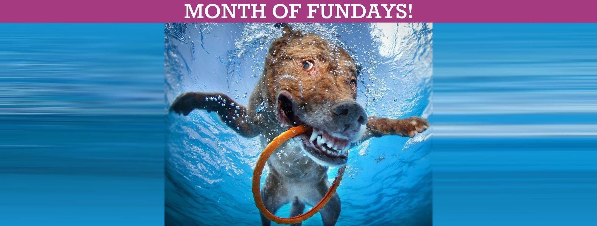 MONTH OF FUNDAYS! Sept. 2021: Skipjacks, Festivals, Music, Stories & More